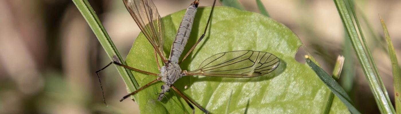 Syngenta Pest Tracker 2020