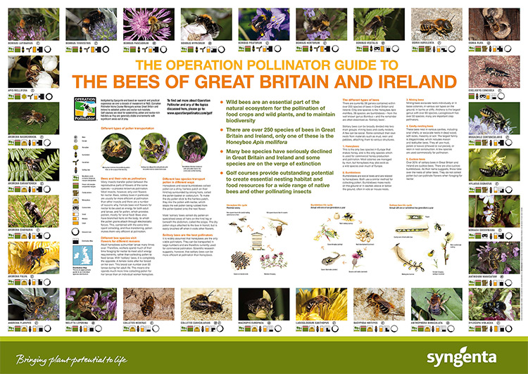 Guide to bumblebees in the United Kingom How to identify them
