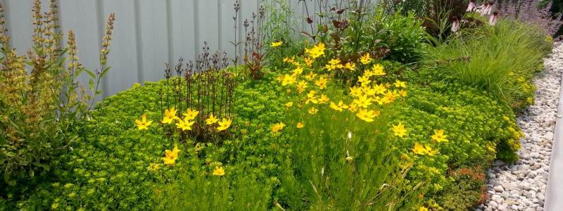 Scorecard Highlights: Green Living Roofs & Walls