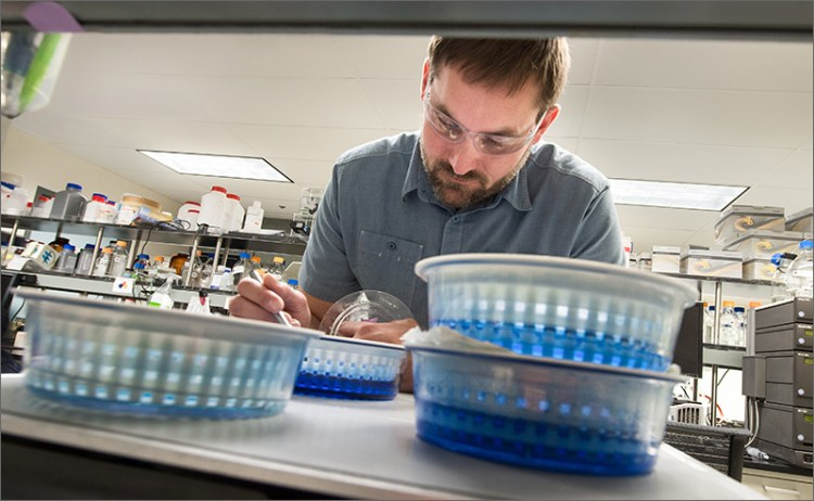 NREL Senior Scientist Roman Brunecky examines the molecular weight of the enzyme CelA on a gel in the Protein Chemistry Lab in the Field Test Laboratory Building on NREL's Golden, Colorado, campus.