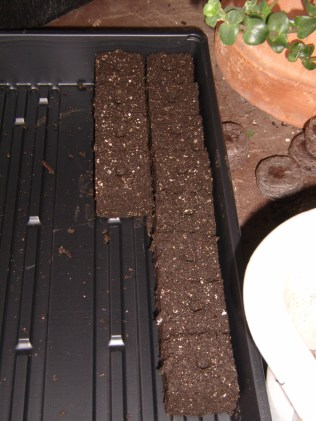 Soil blocks begin to fill a tray.
