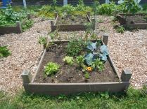 """This year we increased the number of """"personal beds"""" for high school students that have shown a real love of gardening and cultivating food. They choose their crops, tend to their needs and reap the fruits!"""