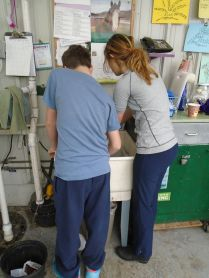 Justin and Madi work together to wash out the cartons.