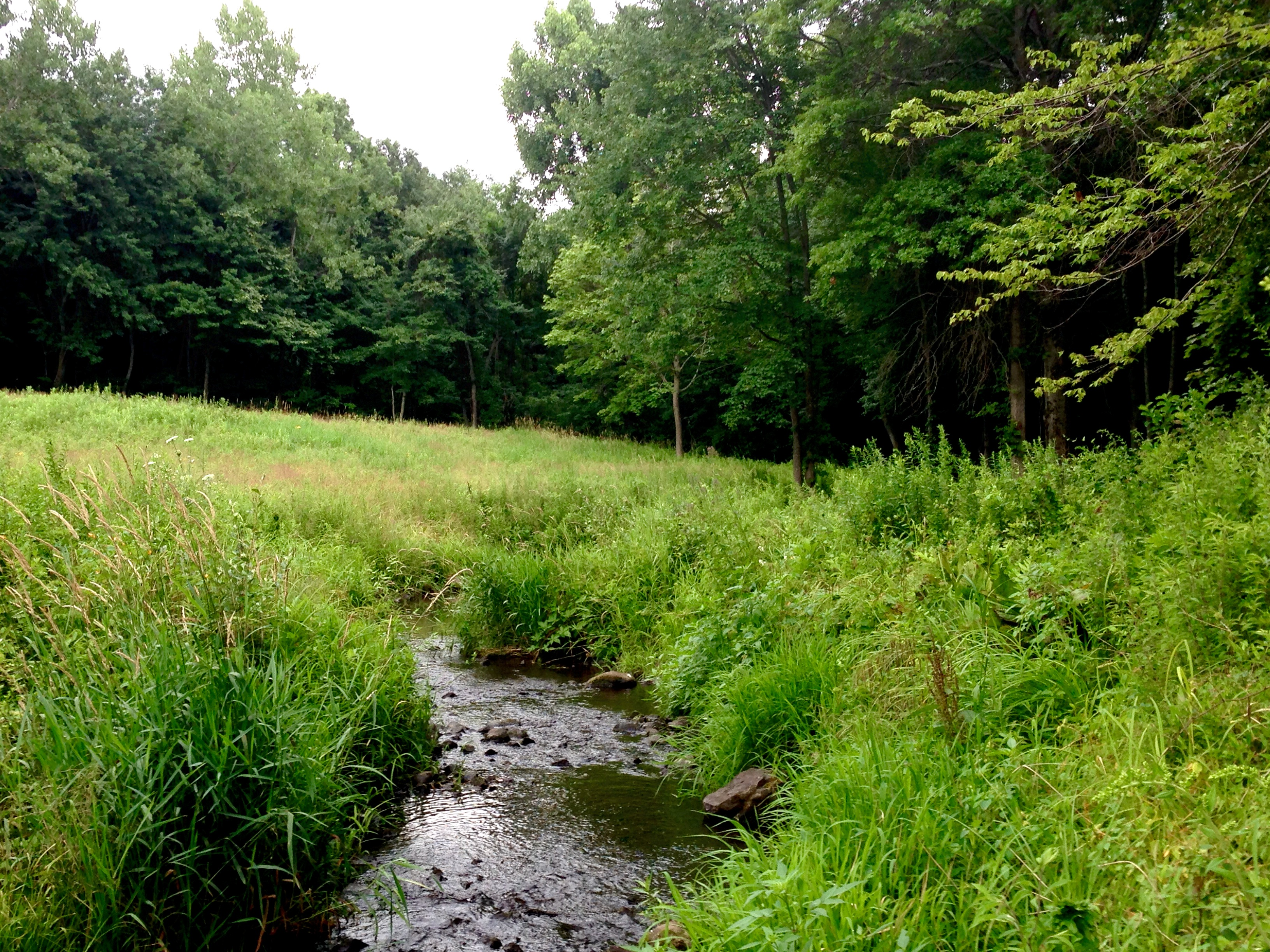 A Suburban Adventure On The West River Amp Its Tributaries