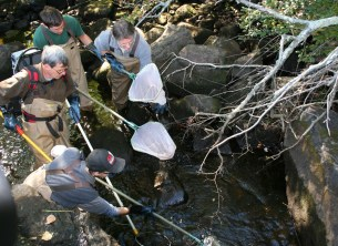 DEEP staff rescuing fish before dam removal
