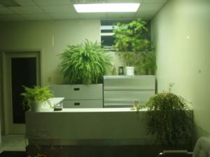 Office with indoor plants. For illustration purpose.