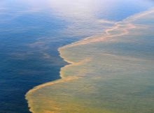 Oil spill approaches the coast - Oil spill in Gulf of Mexico