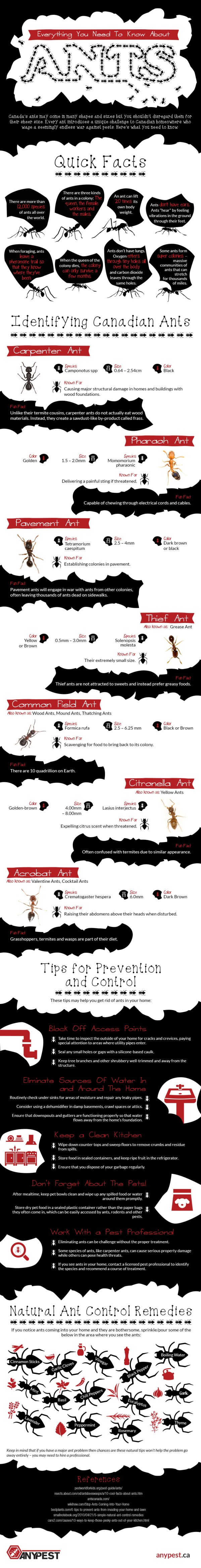 Everything-You-Need-To-Know-About-Ants