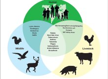 Examples-of-Zoonotic-Diseases