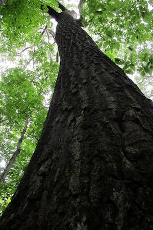 forest quebec2