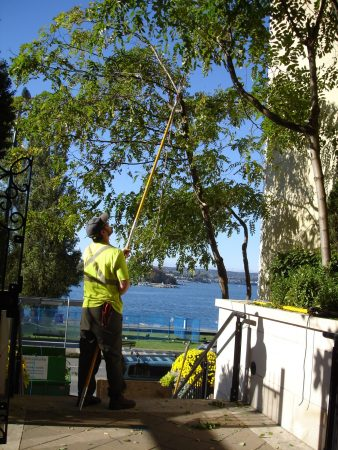 honey locust pruning-beach ave-sept 2010 (3)