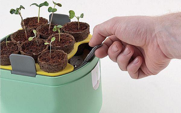 Home vegetable-growing kit