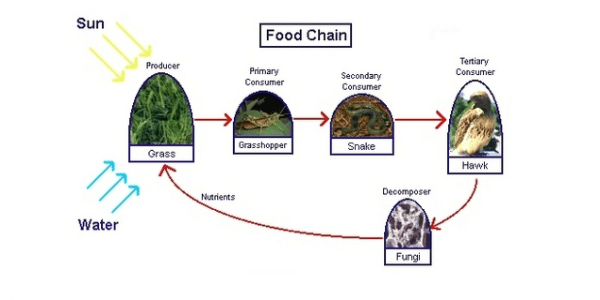 A pictorial representation of biological system