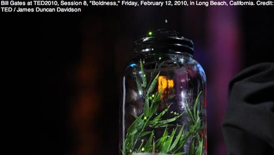 bill gates fireflies2