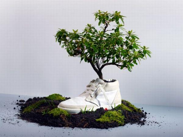 Biodegradable Sneaker