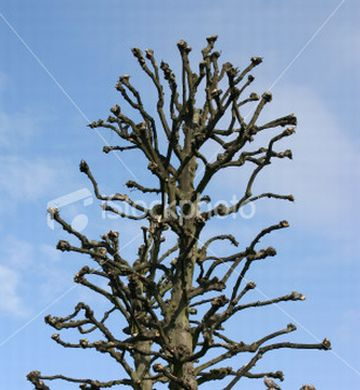 bizarre or ugly tree3