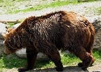 bruno the bear 2263