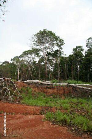 deforested rainforest