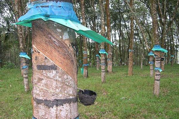 Diesel Tree