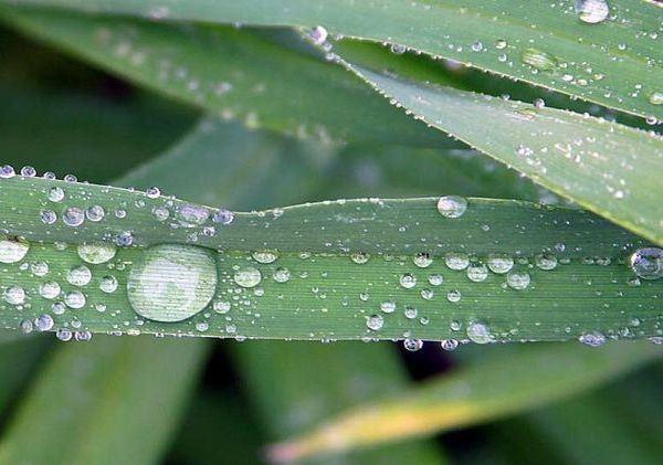 Energy from evaporation on a leaf