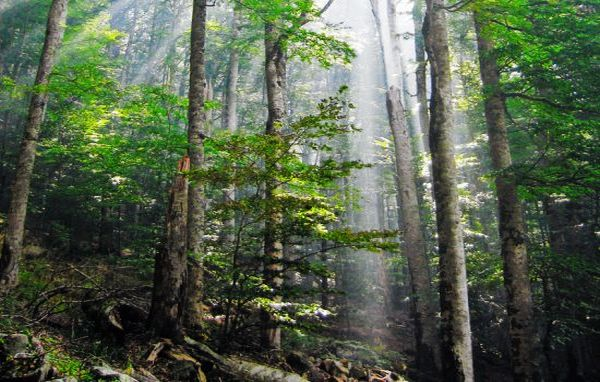 Energy harvested from trees