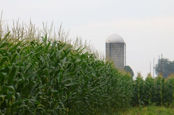 Ethanol made from corn 3
