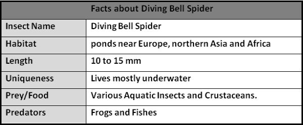 Facts about Diving Bell Spider