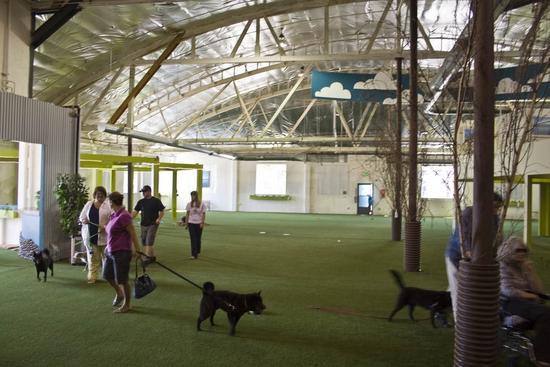 fidos indoor dog park 1