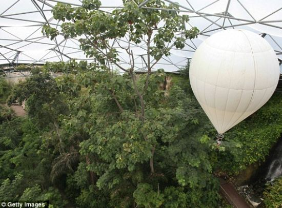 giant helium balloon enables horticulturist to pru