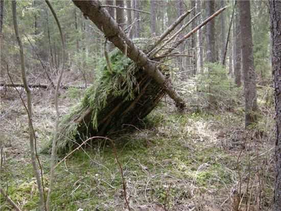 green forest shelter 1