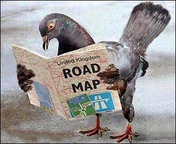 homing pigeon secrets revealed 9