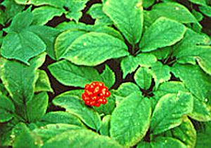 medicinal plant 1822