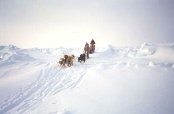 north pole was once lush green