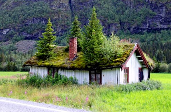 Norwegian Foliage-Covered Green Roofs