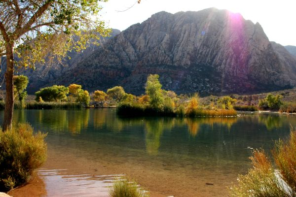 Oasis on a Ranch in Red Rock Canyon