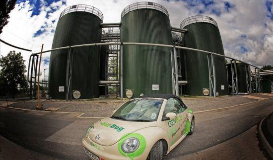 poo powered beetle 4
