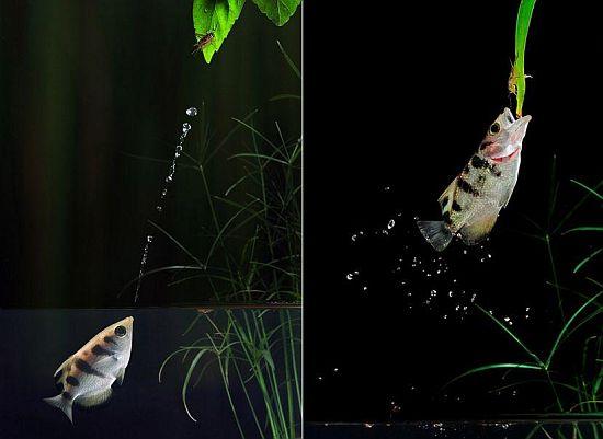 scott linstead captures wild creatures in motion 4