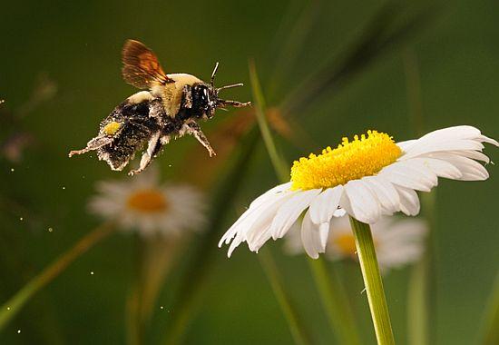 scott linstead captures wild creatures in motion 5