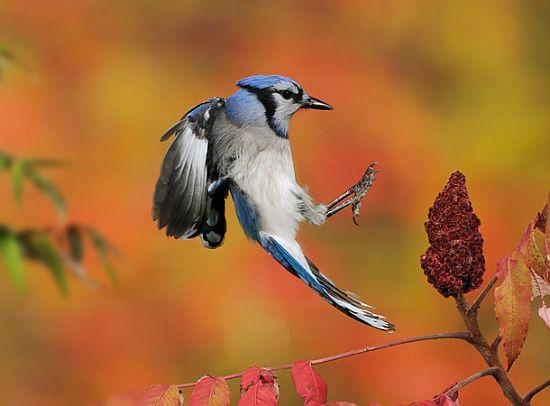 scott linstead captures wild creatures in motion 6