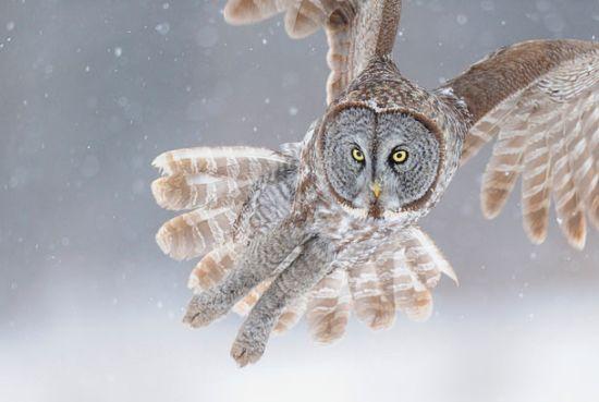 scott linstead captures wild creatures in motion 8