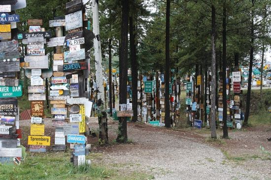 sign post forest 11