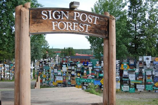 sign post forest 1