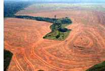 soy farming in amazon