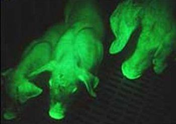 the fluorescent green pig 9