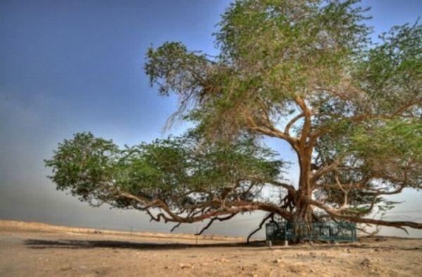 tree of life bahrain 500x328
