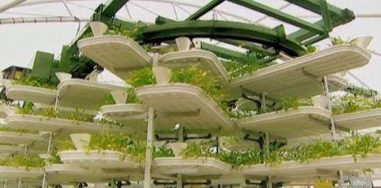 vertical growing system 2
