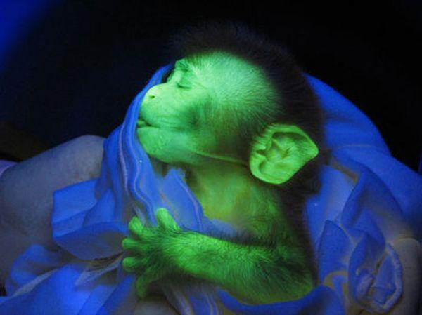 Weird Green Animals 6