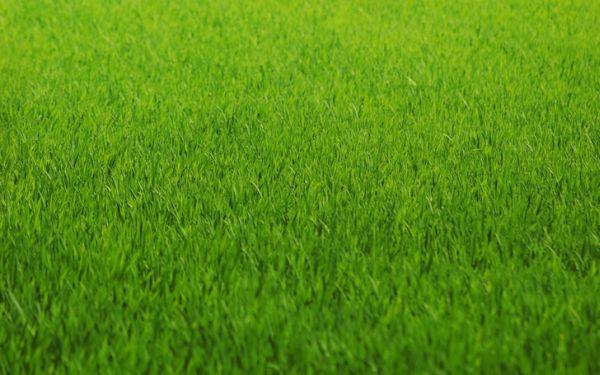 good quality grass