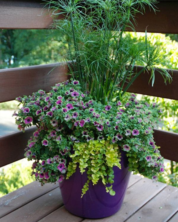 Container gardening (4)