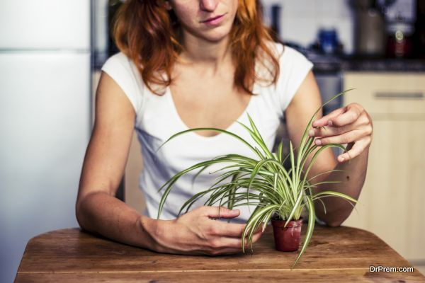 Woman tidying her plant